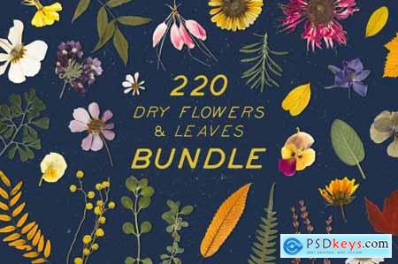 BUNDLE - Dry Flowers & Leaves 4592866