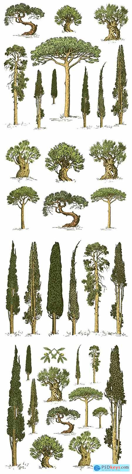 Trees different rocks set of engraved and painted illustrations