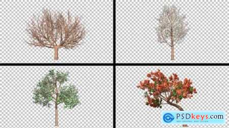 Four Season Tree Pack 23260793