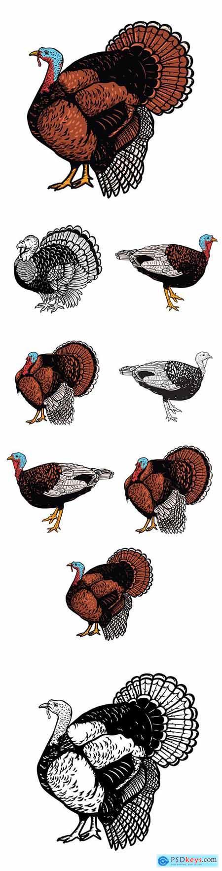 Thanksgiving illustration turkey on white background illustration