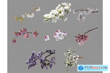 Flower Branch Overlays, PNG 5264581