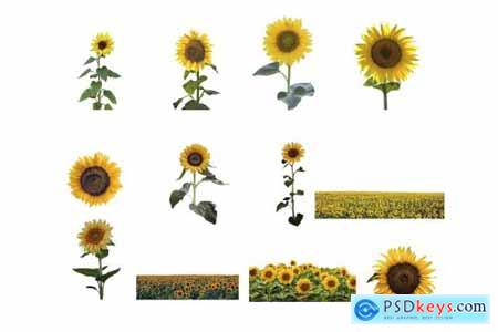 Sunflower Photoshop Overlays, PNGs 5264990