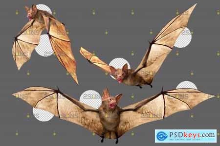 32 Halloween overlay Photoshop overlay Realistic bat clipart