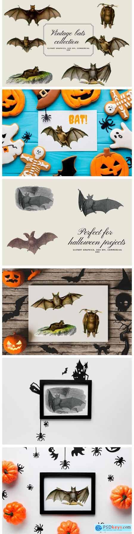 Vintage Bats Collection, Creepy Graphics 5919304