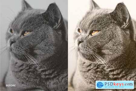 Lightroom Preset-Lovely Cat Theme 4973248