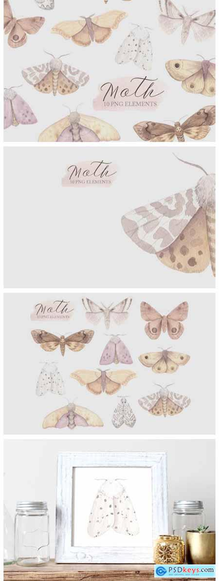 Watercolor Moth Clipart 3648422