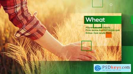 Agrarian Vision 28581167