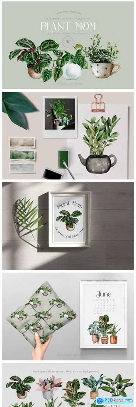 House Plants Illustrations and Patterns 10780007