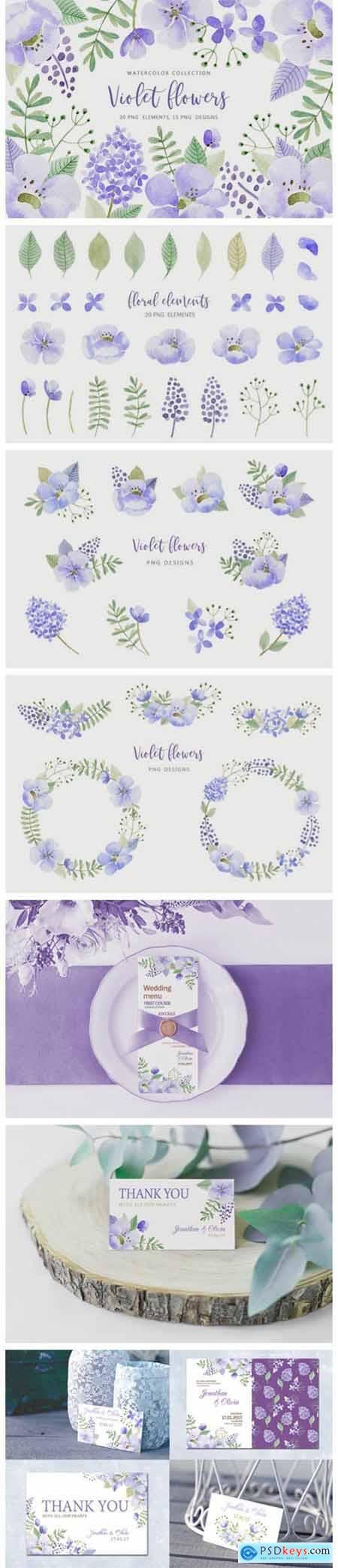 Violet Flowers 11623120