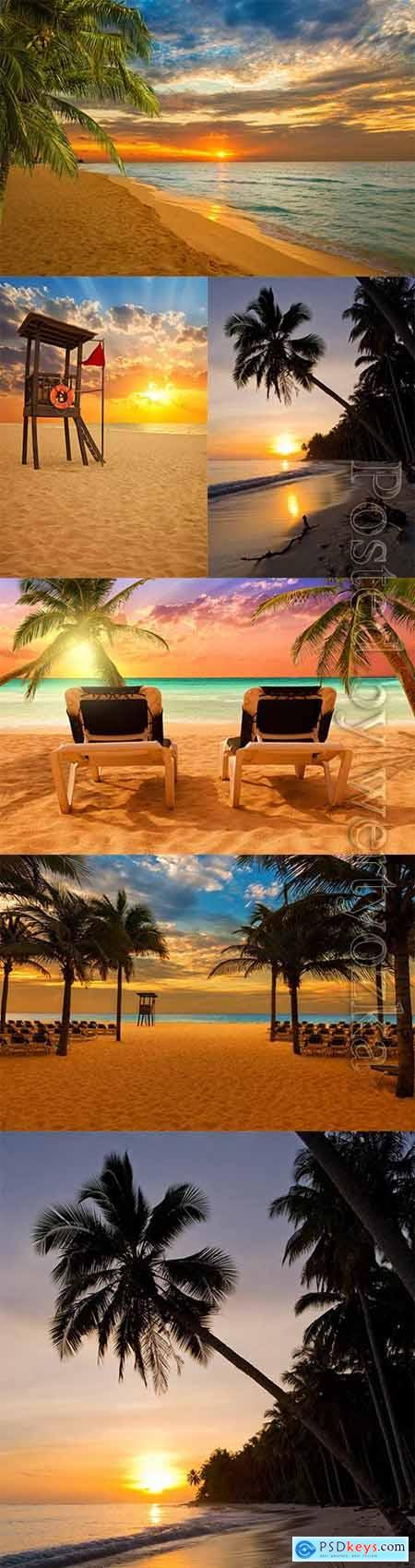 Sunset at the seaside, palm trees stock photo