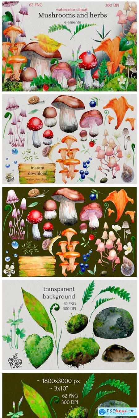 Watercolor Cliparts of Mushrooms 14755508