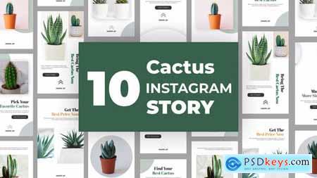 Cactus Instagram Story Pack 33211459